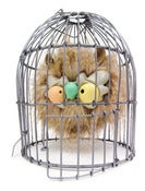 Image of Rowly In cage