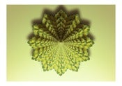 Image of Lemon Balm Fractal.