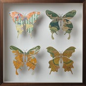 Image of Four butterfly artwork Nº50