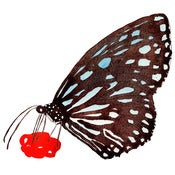 Image of Butterfly - print
