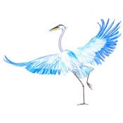 Image of Blue heron - print
