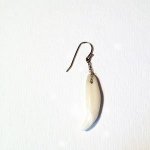 Image of coyote tooth earrings