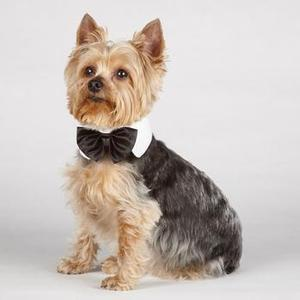 Image of Aria Canine Royale Bowtie - Black Satin