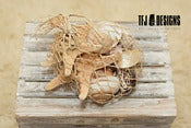 Image of Seashells &amp; Star Fish - Beach Nautical Prop - 10 Pieces