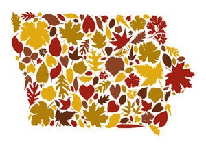 Image of Iowa Fall Postcard/Print by Joseph Hughes