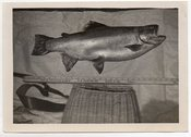 Image of FISH OF THE DAY FISHING CREEL YARD STICK VINTAGE SNAPSHOT PHOTO